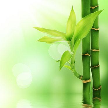 bamboo_yastik_urun_sayfasi_kucuk